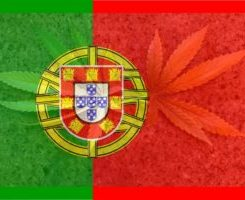 Americans Tour Portugal to See Benefits of Full Decriminalization